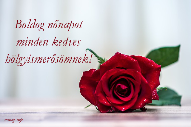 Boldog nőnapot minden kedves hölgyismerősömnek - piros rózsa